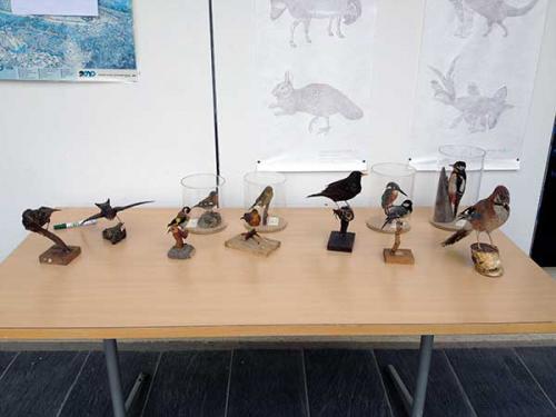 Oiseaux Notre Dame du Lac 2015